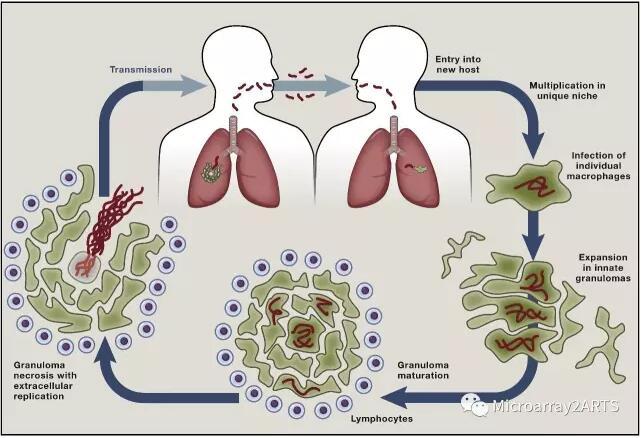 新资讯:上海交大团队构建首个肺结核分枝杆菌丝氨酸/苏氨酸蛋白激酶